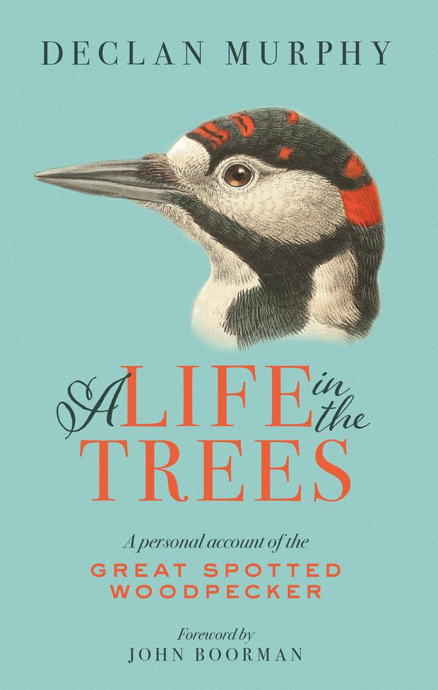 The cover of A Life in the Trees