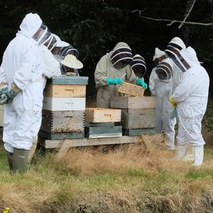 Mary Montaut and other beekeepers examing a hive
