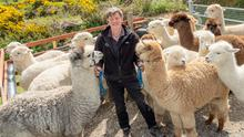 Joe Phelan with some of his alpacas