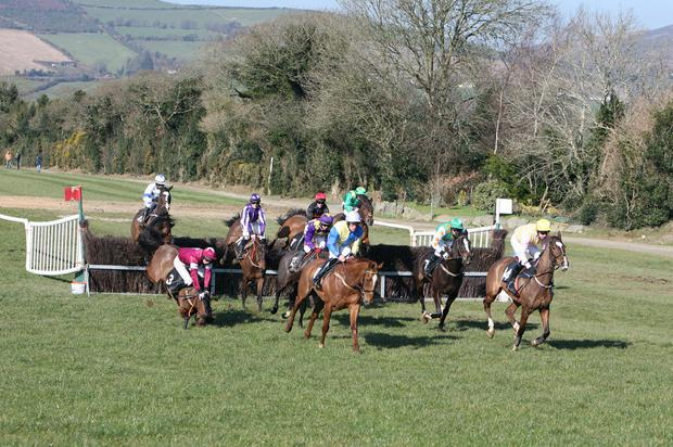 Axiomatic with J.P.O'Rourke part company at the Bray Harriers point to point at Fairwood, Tinahely. Photo: Joe Byrne