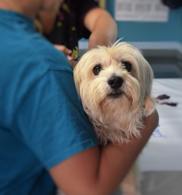 Vets are not allowed to routinely use human medicines for pets