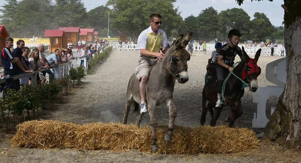 Donkey derby at the Newmarket and District Agricultural Show