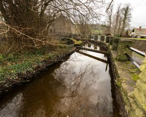 The deep stream by the rear of Bealick Mill, Macroom where the two salmon were spotted by local fisherman, Tom Sweeney. It is believed to have been approximately 50 years since salmon were last spotted in this area and the find is regarded as significant