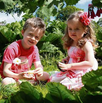 Curious Critters! Christopher and Ali Twohig practice their bug hunting in anticipation of Ireland's first ever Bug Festival at Millstreet Country Park taking place on July 20th and 21st.