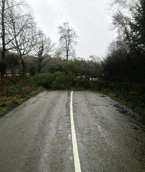 A tree down across the road at Strawhall, Fermoy, last Wednesday afternoon. Photo: Dermot Fitzgerald