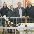 Agriculture minister Michael Creed taking a hands on approach at the National Dairy Show in Millstreet last week, with Michael Ó Gorman, Maria Burke of the National Dairy Council, Tom Duggan of Zoelis, and Mairead Piggot of Millstreet Vets