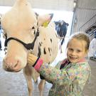 Zoe Greenan provided a helping hand at the Millstreet National Dairy Show. Pictures John Tarrant