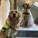 Bride Jodie getting her wedding dress fitted with her groom Ozzie ahead of their impending nuptials at the Ballincollig Regional Park next month