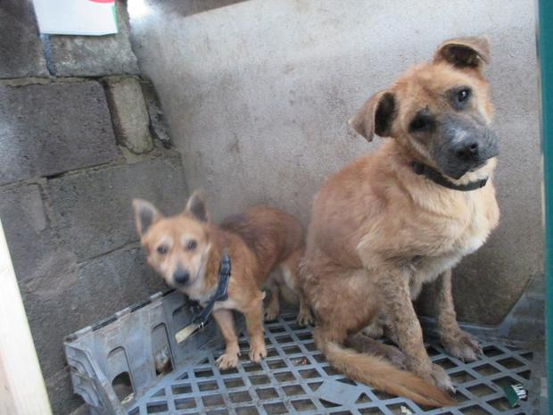 """The two dogs were found in """"appalling conditions"""" in Mallow following a call to the ISPCA National Animal Helpline"""