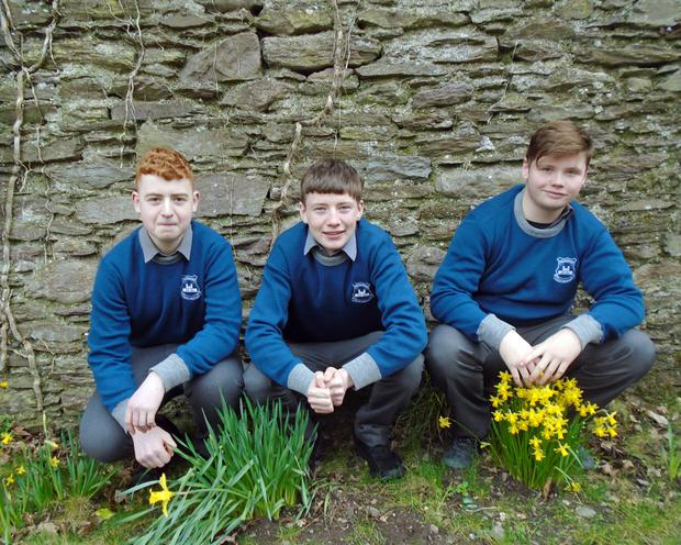 Transition year pupils Tadhg Sheehan, Patrick Kavanagh and Hugh Murray at the recent biodiversity project at McEgan College