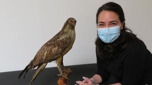 UCC MA Museum Studies student, Maggie, with a taxidermy Osprey, featured in the online exhibition