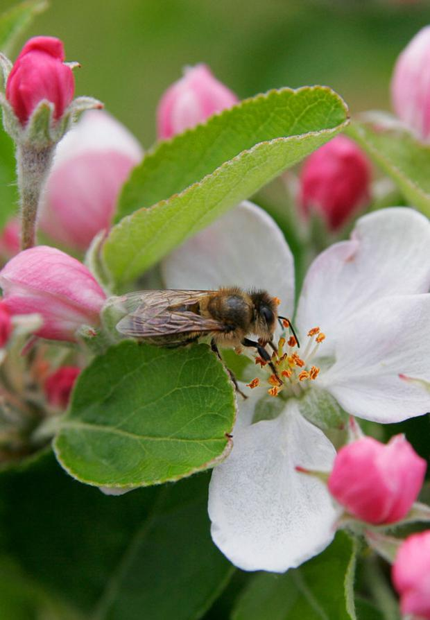 Bee populations are suffering for a variety of reasons