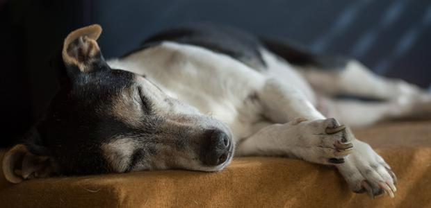 Euthanasia is a gentle, peaceful process for pets