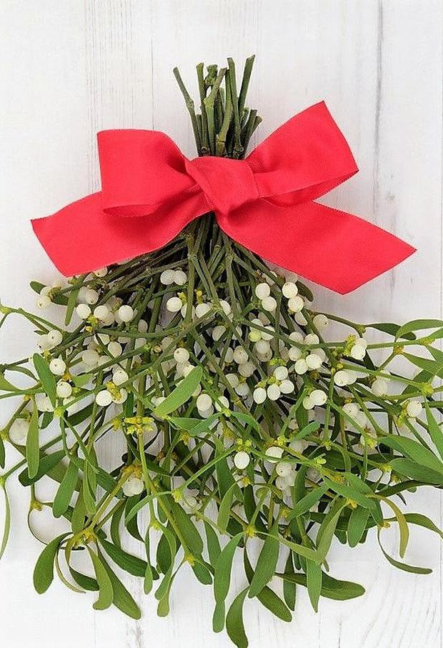 Mistletoe is an ancient pagan fertility symbol that still finds a place in Christmas celebrations