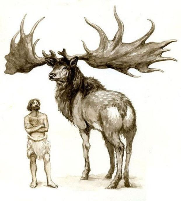 Extinct mature male Irish Deer were adorned with antlers with a span of up to 3.6m, the length of a car