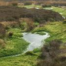 Blanket bogs are a habitat that Ireland is rich in because of our relatively high rainfall.