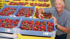 Jimmy Kearns with some of the strawberries from his farm.