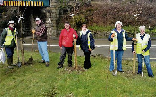 Tidy Towns volunters Mary Porter, Gerard Fleming, Billy Halford, Liz Kenny, Cel Leacy and Margaret O'Hara planting trees at the junction of the Arklow Road and the Coach Road.