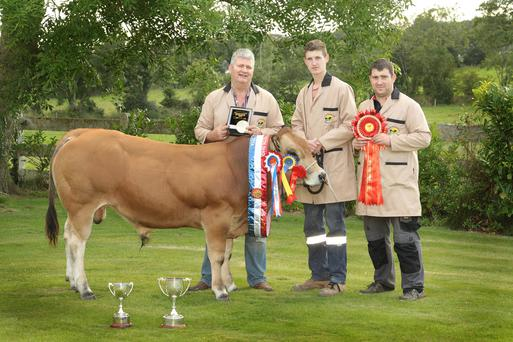 Cllr Paddy Kavanagh at his farm in Drumgoold with sons Patrick and Conall and their prize-winning bull.