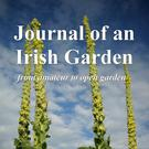 Rachel Darlington's new book 'Journal of an Irish Garden' is on sale now