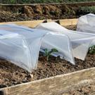 Vegetable rows under cover