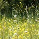 Approximately one in ten people in Ireland experience hay fever.