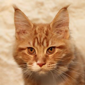 Aslan, the remarkable cat, will be missed by Pete and his family.