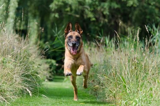Exercise is important to keep pets lean and mentally healthy