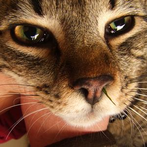 There are many possible causes of sneezing in pets, such as a blade of grass stuck in the nostril