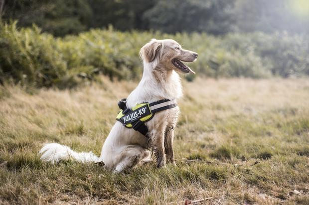 Harnesses are a kinder, better way of restraining dogs