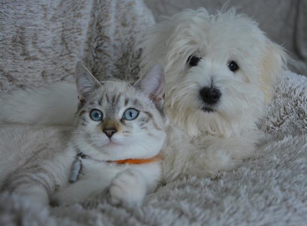 New Year is a good time to review your pet care priorities
