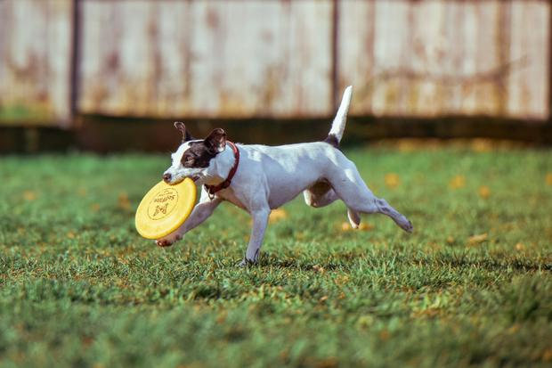 Fleas and ticks are common on pets that spend time outdoors