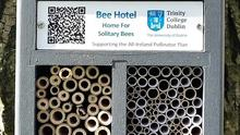 An example of a newly constructed bee hotel about 30cm tall offering more than enough top quality accommodation