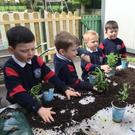 Getting their hands dirty for the Kilcoskan 'Big Grow'