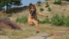 Dogs have evolved to need regular exercise