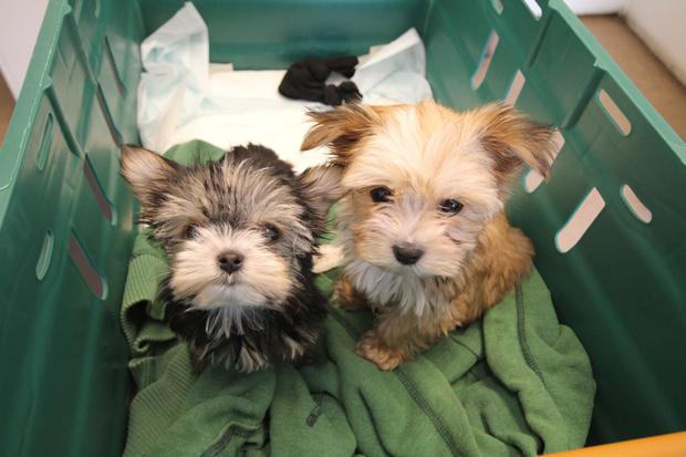 Puppy farm laws in Ireland need to be fully enforced
