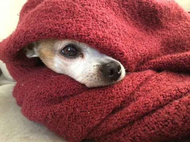 Smaller,fine-haired dogs are more prone to chilling