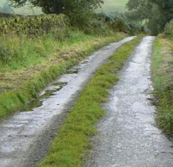On many narrow country roads the centre strip remains untouched, becoming a long, skinny sanctuary.
