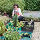 Mary Nolan busy planting