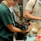 After-hours veterinary care for pets can be life saving