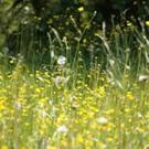 There are a number of natural antihistamines that you could consider to help with symptoms of hay fever