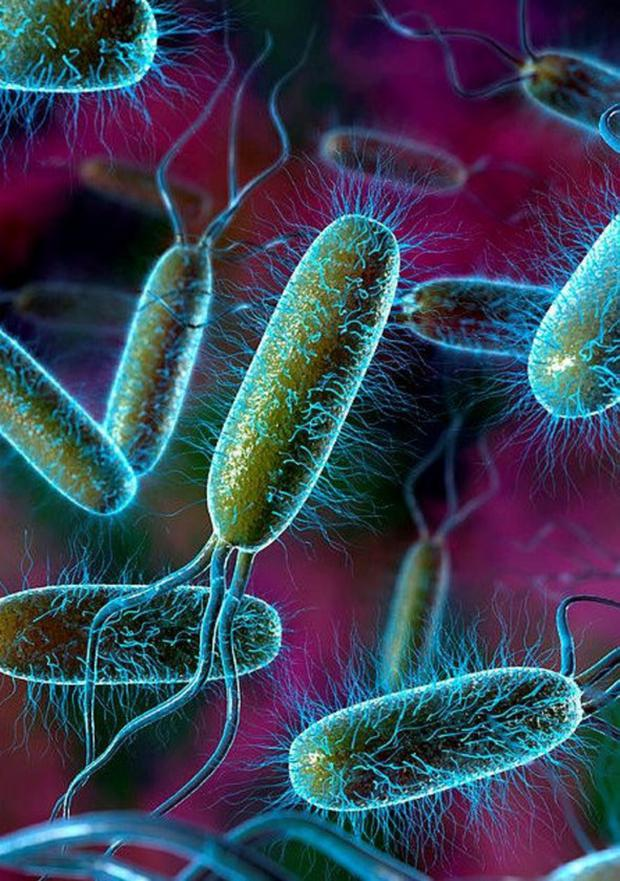 Part of a colony of E.coli bacteria, a species that is very common and very widespread