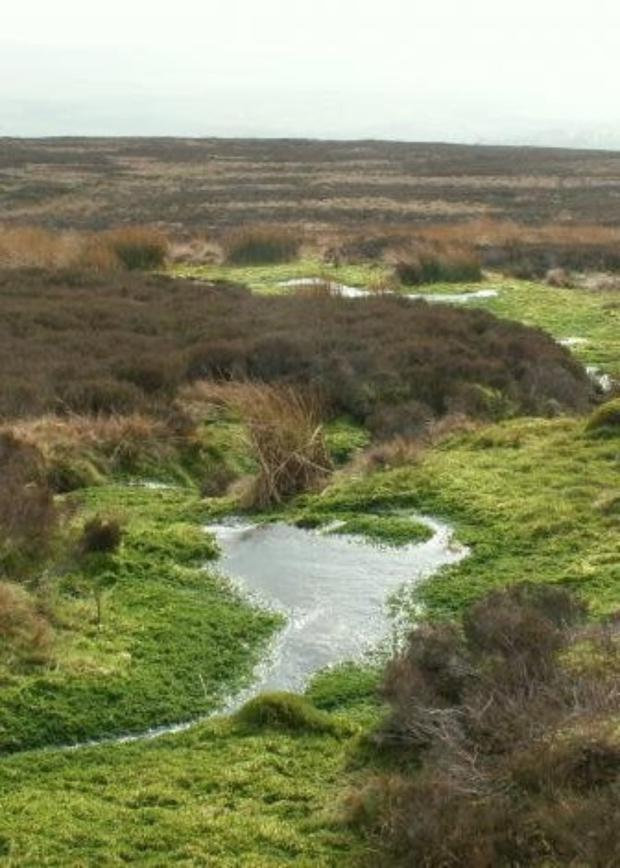 Blanket bogs are a habitat that Ireland is rich in because of our relatively high rainfall