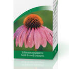 Echinacea can help boost the immune system