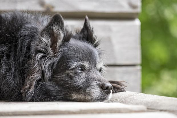 Pets live for longer if they have healthy mouths