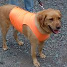 High visibility is important for dogs walking close to roads