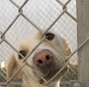 'Shameful record' on rehoming dogs