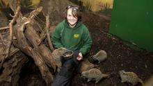 Ann O'Connor with some of the meerkats at Secret Valley. Photos: Mary Browne
