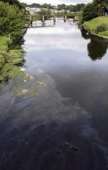 The oil slick spotted on the River Slaney.