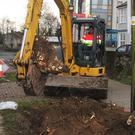 The old trees on The Avenue are to be replaced later this year as part of a revamp of the street